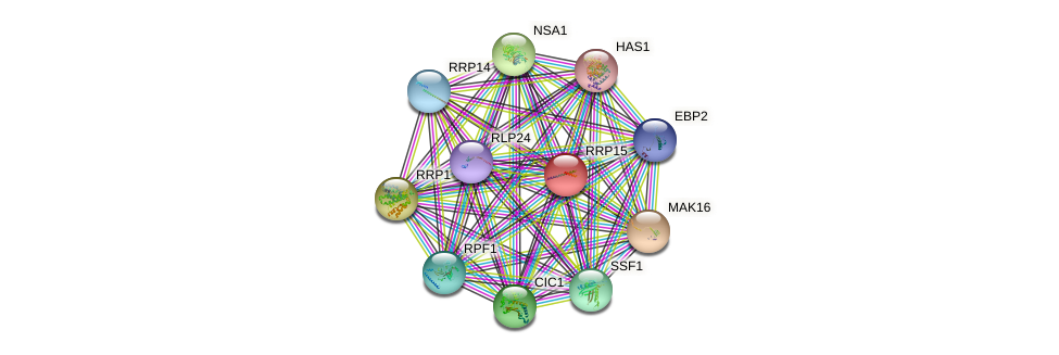 RRP15 protein (Saccharomyces cerevisiae) - STRING interaction network
