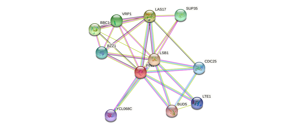 PIN3 protein (Saccharomyces cerevisiae) - STRING interaction network
