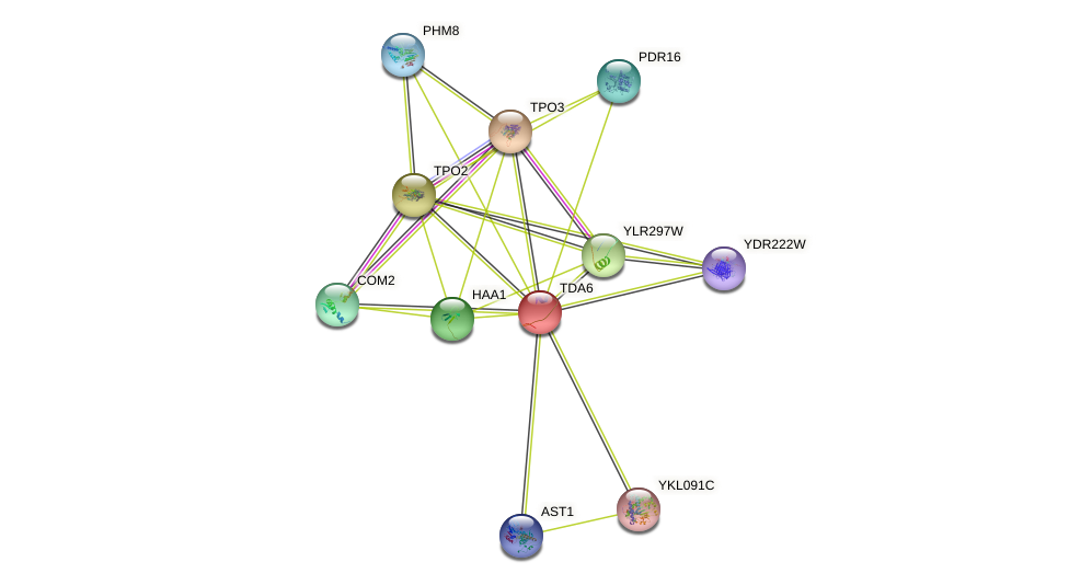 TDA6 protein (Saccharomyces cerevisiae) - STRING interaction network