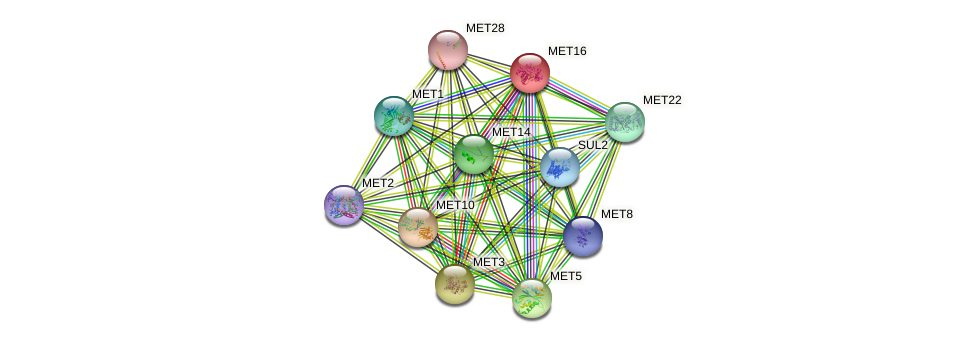 MET16 protein (Saccharomyces cerevisiae) - STRING interaction network
