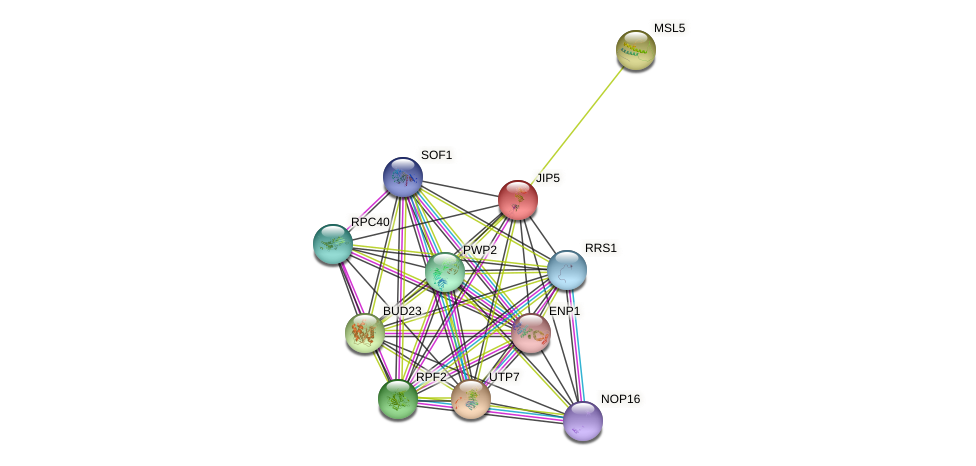 JIP5 protein (Saccharomyces cerevisiae) - STRING interaction network