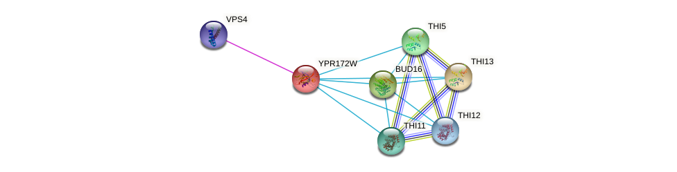 YPR172W protein (Saccharomyces cerevisiae) - STRING interaction network