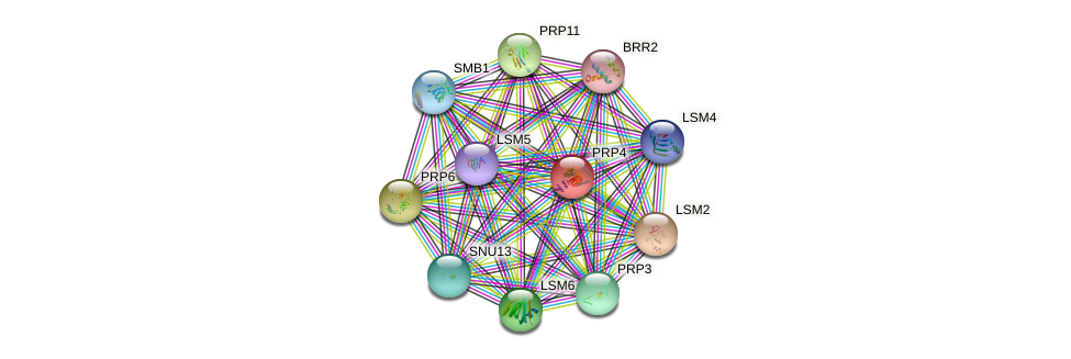 PRP4 protein (Saccharomyces cerevisiae) - STRING interaction network