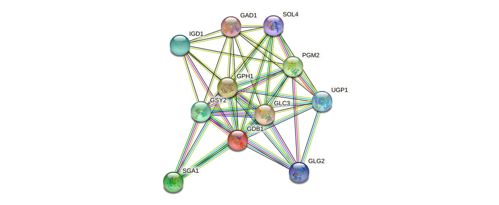 GDB1 protein (Saccharomyces cerevisiae) - STRING interaction network