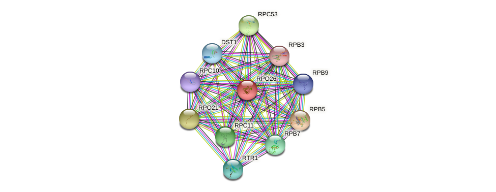 RPO26 protein (Saccharomyces cerevisiae) - STRING interaction network