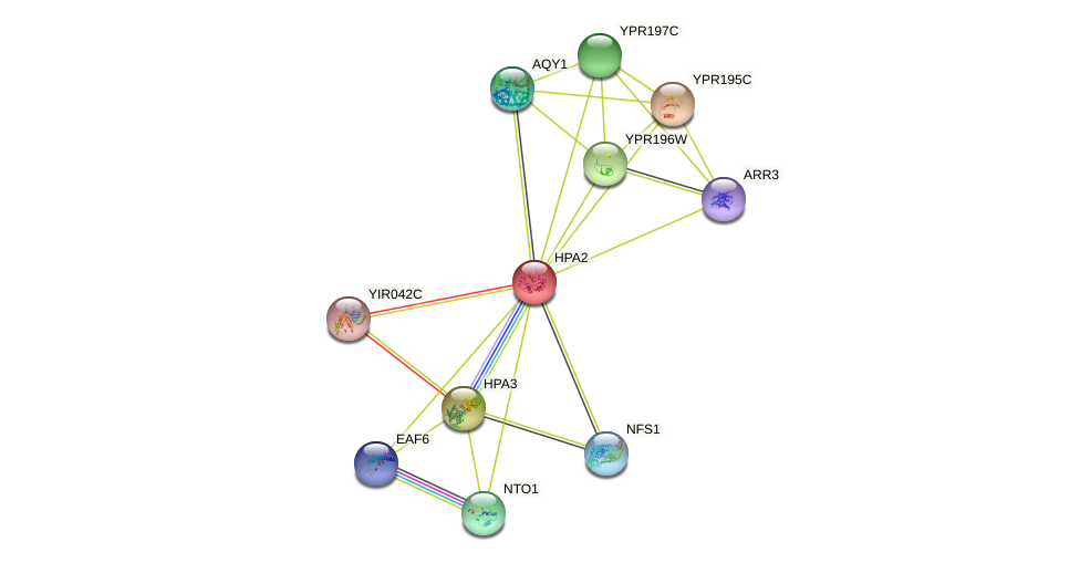 HPA2 protein (Saccharomyces cerevisiae) - STRING interaction network