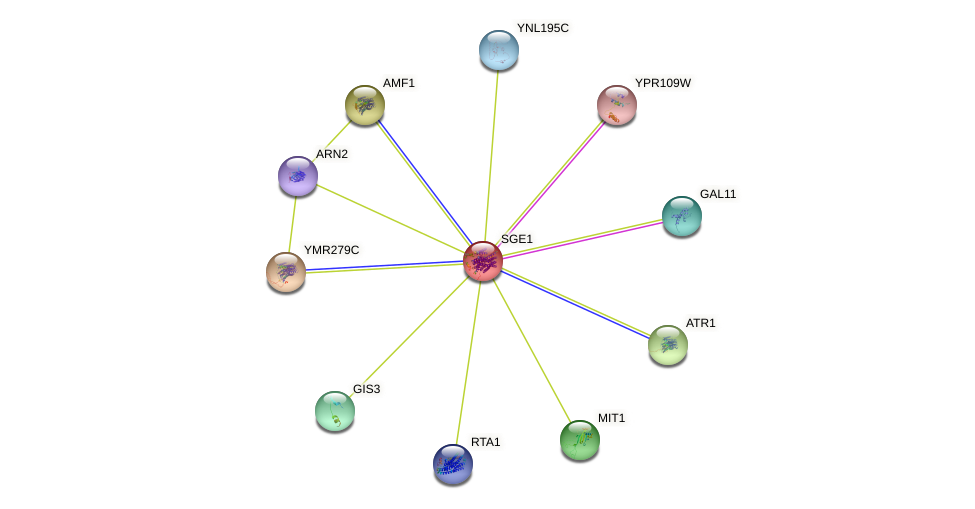 SGE1 protein (Saccharomyces cerevisiae) - STRING interaction network