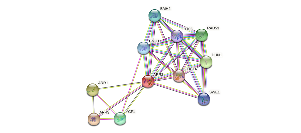 ARR2 protein (Saccharomyces cerevisiae) - STRING interaction network