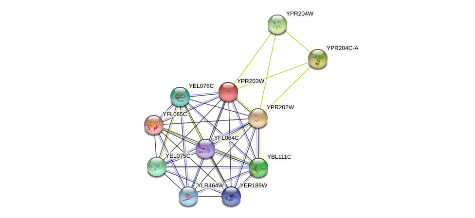YPR203W protein (Saccharomyces cerevisiae) - STRING interaction network