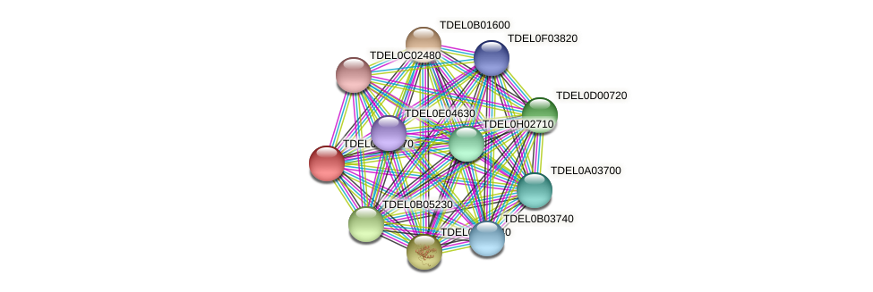 XP_003679010.1 protein (Torulaspora delbrueckii) - STRING interaction network