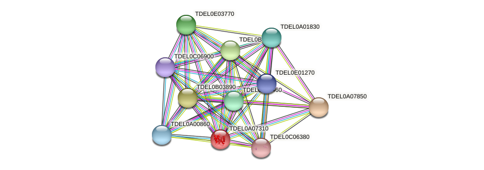 XP_003679274.1 protein (Torulaspora delbrueckii) - STRING interaction network