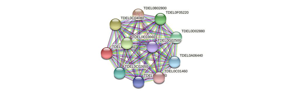 XP_003679515.1 protein (Torulaspora delbrueckii) - STRING interaction network