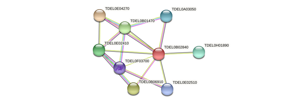 XP_003679624.1 protein (Torulaspora delbrueckii) - STRING interaction network