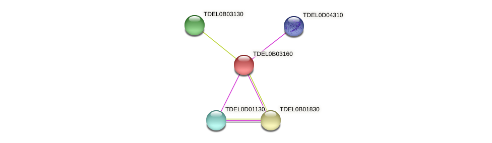 XP_003679656.1 protein (Torulaspora delbrueckii) - STRING interaction network