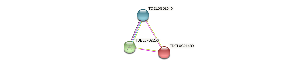 XP_003680248.1 protein (Torulaspora delbrueckii) - STRING interaction network