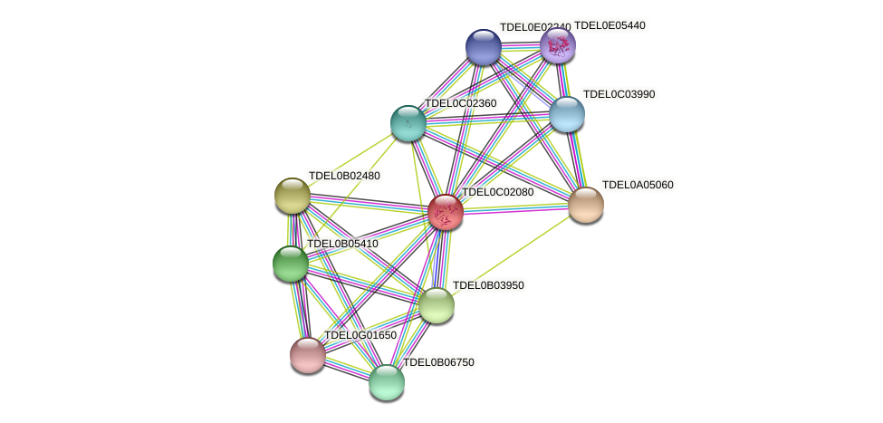 XP_003680308.1 protein (Torulaspora delbrueckii) - STRING interaction network