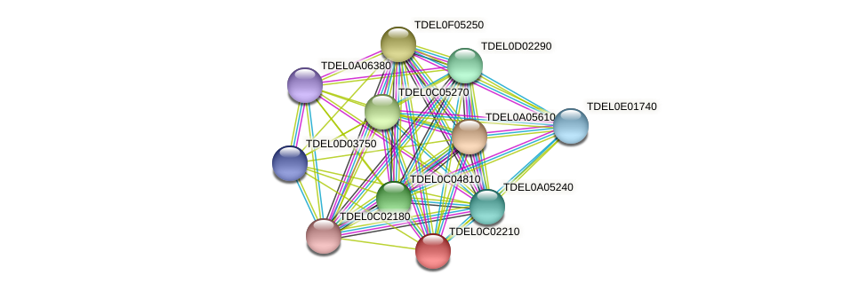 XP_003680321.1 protein (Torulaspora delbrueckii) - STRING interaction network