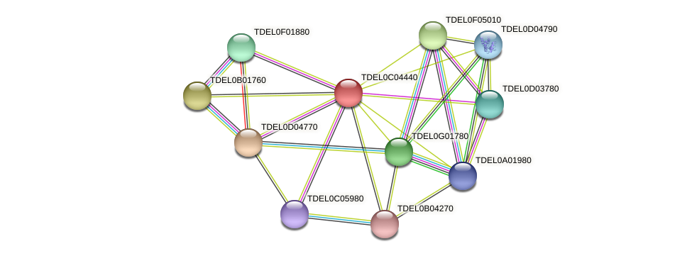 XP_003680544.1 protein (Torulaspora delbrueckii) - STRING interaction network