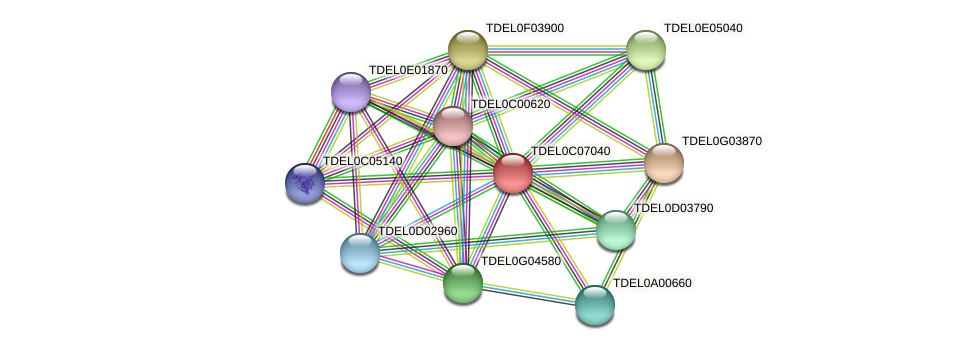 XP_003680804.1 protein (Torulaspora delbrueckii) - STRING interaction network