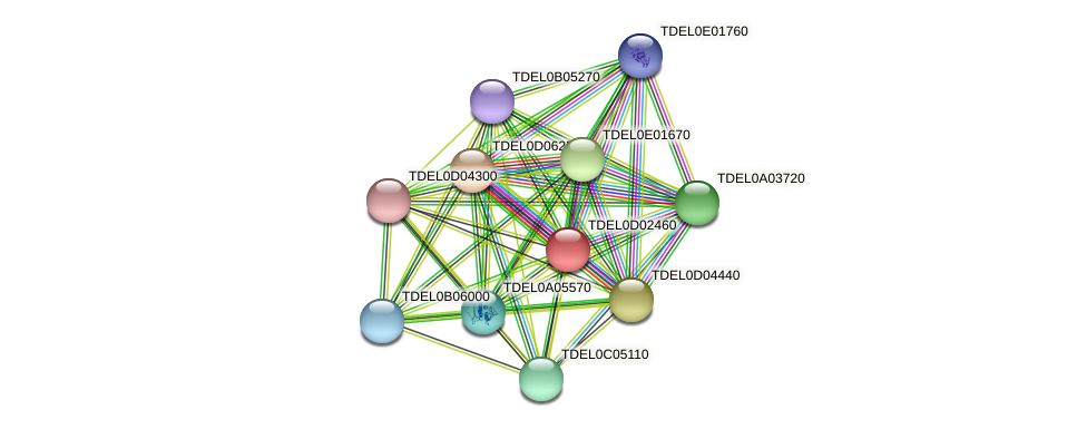 XP_003681041.1 protein (Torulaspora delbrueckii) - STRING interaction network