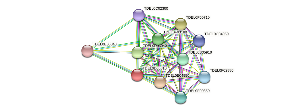 XP_003681376.1 protein (Torulaspora delbrueckii) - STRING interaction network