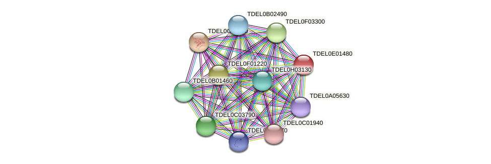 XP_003681602.1 protein (Torulaspora delbrueckii) - STRING interaction network