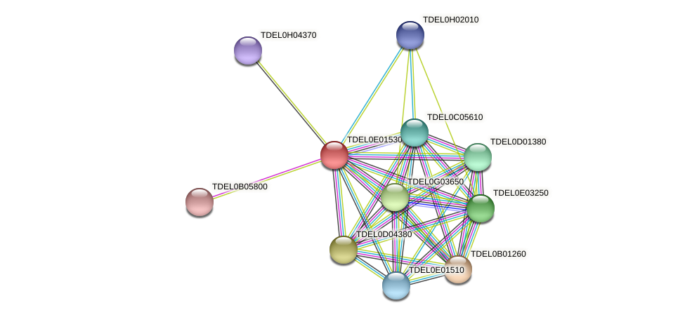 XP_003681607.1 protein (Torulaspora delbrueckii) - STRING interaction network