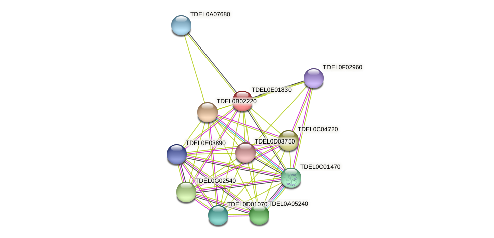 XP_003681637.1 protein (Torulaspora delbrueckii) - STRING interaction network