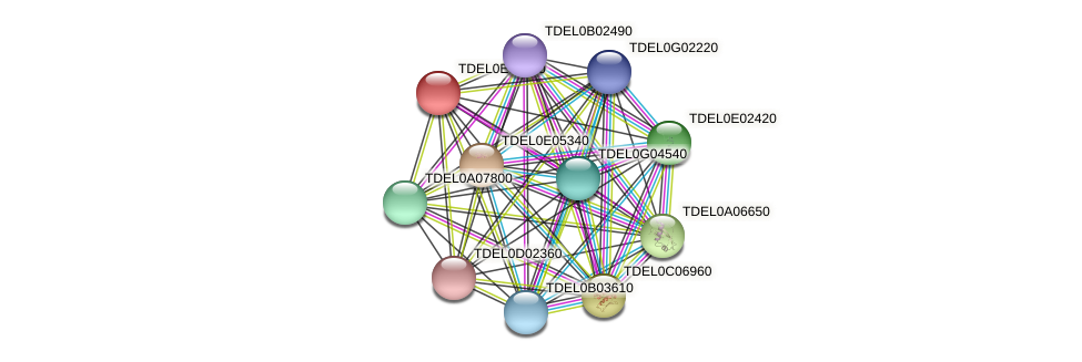 XP_003681660.1 protein (Torulaspora delbrueckii) - STRING interaction network