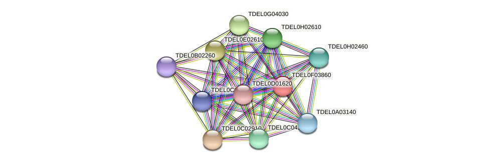 XP_003682408.1 protein (Torulaspora delbrueckii) - STRING interaction network