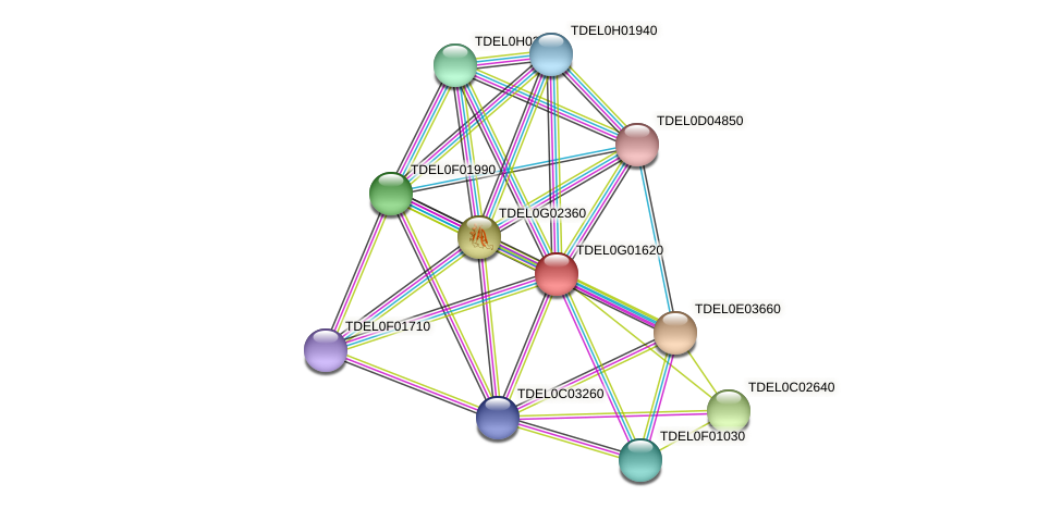 XP_003682740.1 protein (Torulaspora delbrueckii) - STRING interaction network