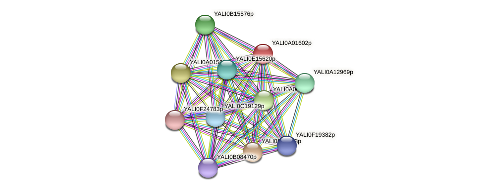 XP_002142981.1 protein (Yarrowia lipolytica) - STRING interaction network