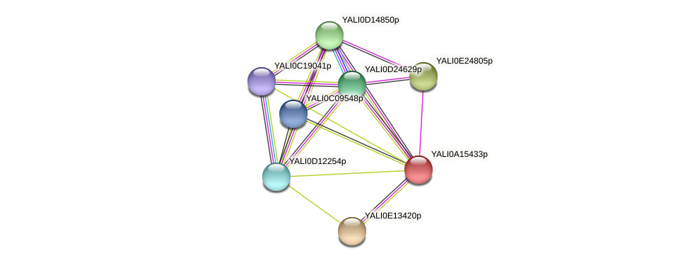 XP_002142989.1 protein (Yarrowia lipolytica) - STRING interaction network