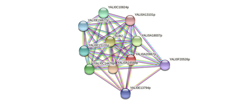 XP_002142994.1 protein (Yarrowia lipolytica) - STRING interaction network
