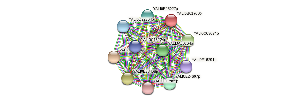 XP_002142996.1 protein (Yarrowia lipolytica) - STRING interaction network