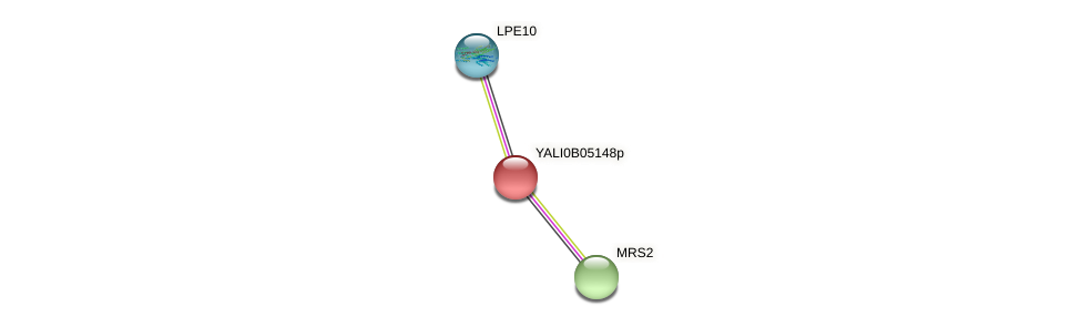 XP_002143006.1 protein (Yarrowia lipolytica) - STRING interaction network
