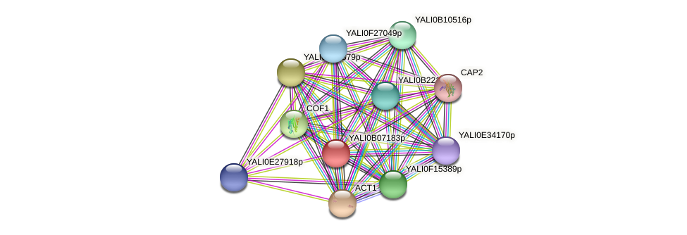 XP_002143009.1 protein (Yarrowia lipolytica) - STRING interaction network