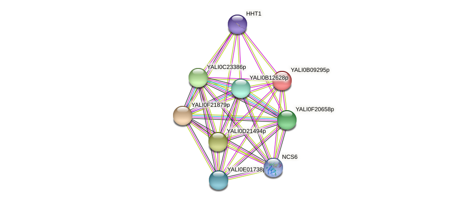XP_002143010.1 protein (Yarrowia lipolytica) - STRING interaction network