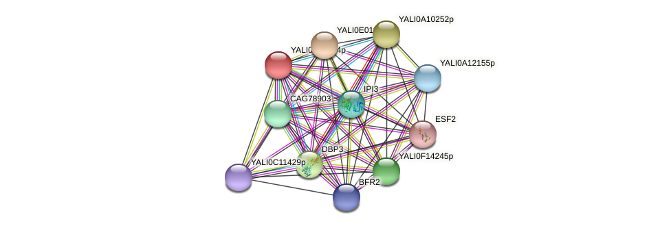 XP_002143012.1 protein (Yarrowia lipolytica) - STRING interaction network