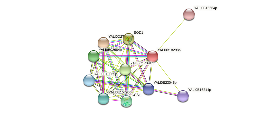 XP_002143019.1 protein (Yarrowia lipolytica) - STRING interaction network