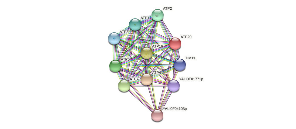 XP_002143021.1 protein (Yarrowia lipolytica) - STRING interaction network