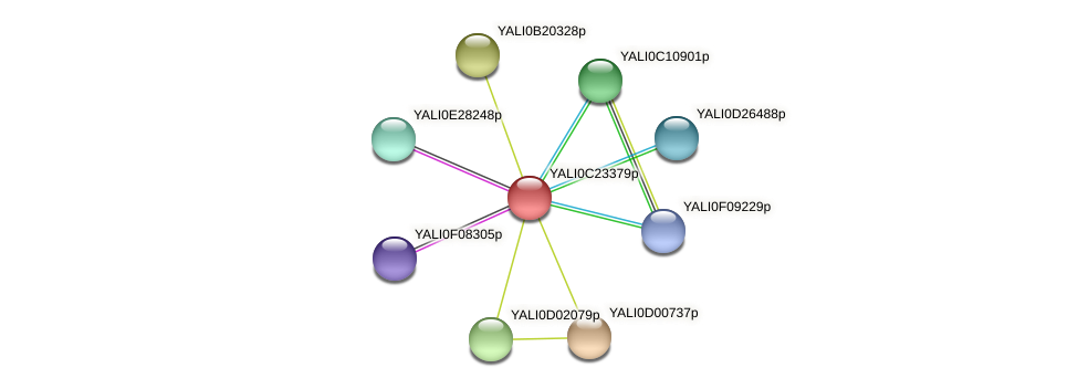 XP_002143043.1 protein (Yarrowia lipolytica) - STRING interaction network