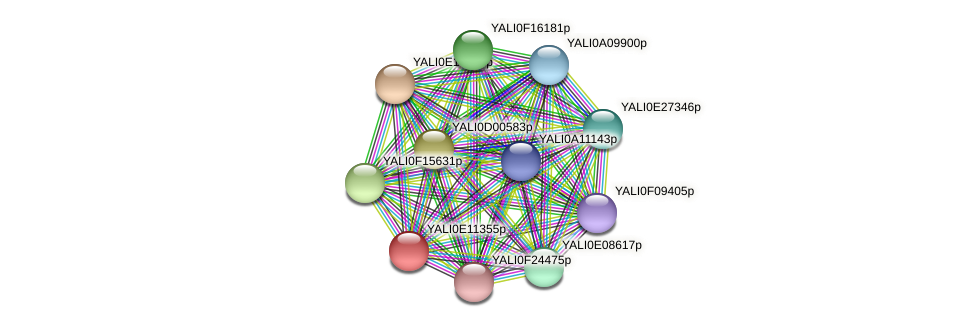 XP_002143070.1 protein (Yarrowia lipolytica) - STRING interaction network