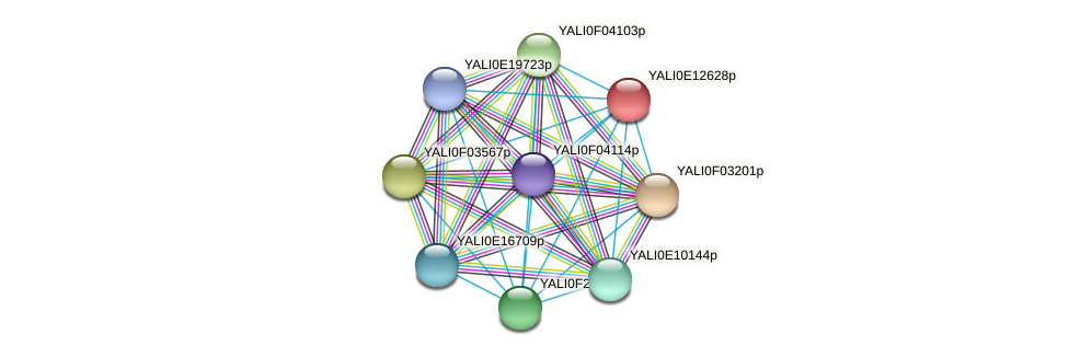 XP_002143072.1 protein (Yarrowia lipolytica) - STRING interaction network