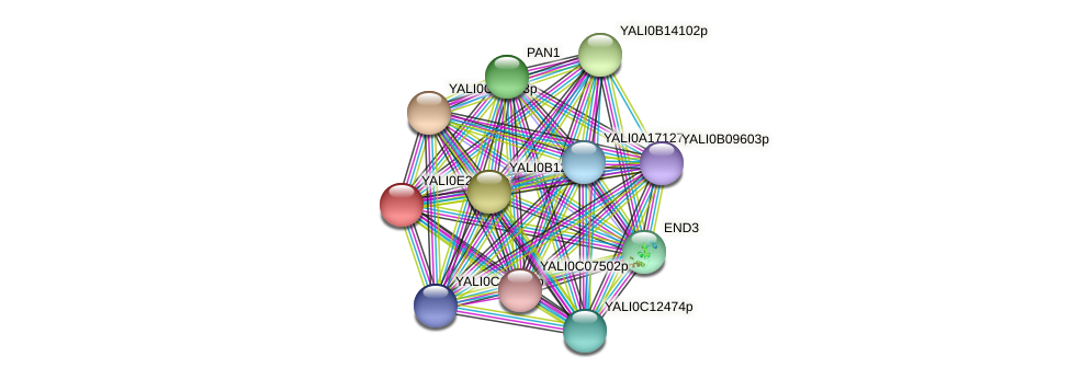 XP_002143079.1 protein (Yarrowia lipolytica) - STRING interaction network