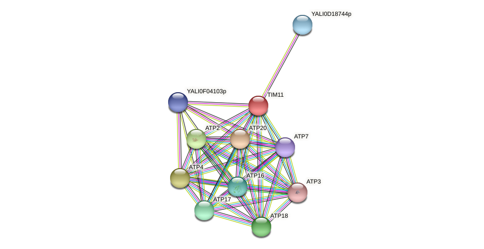 XP_002143092.1 protein (Yarrowia lipolytica) - STRING interaction network