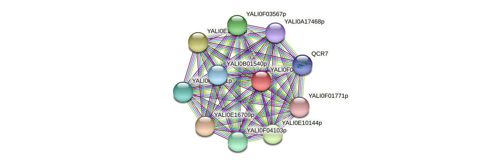 XP_002143103.1 protein (Yarrowia lipolytica) - STRING interaction network