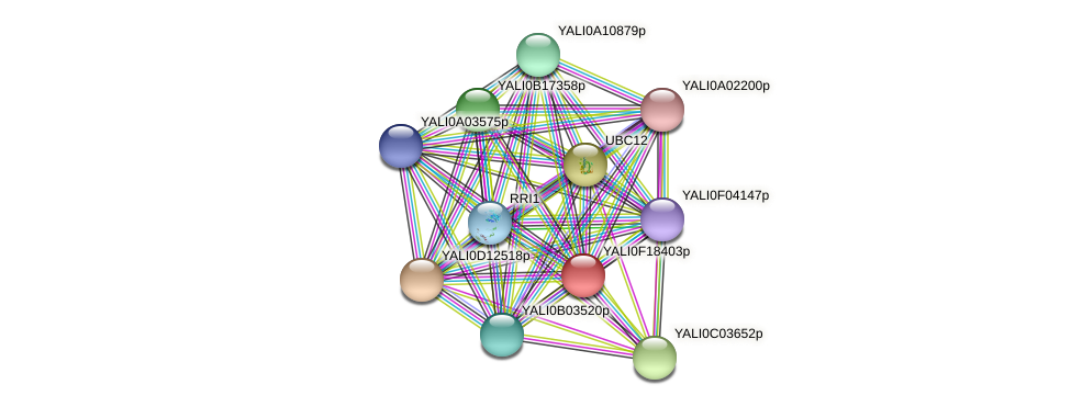 XP_002143115.1 protein (Yarrowia lipolytica) - STRING interaction network