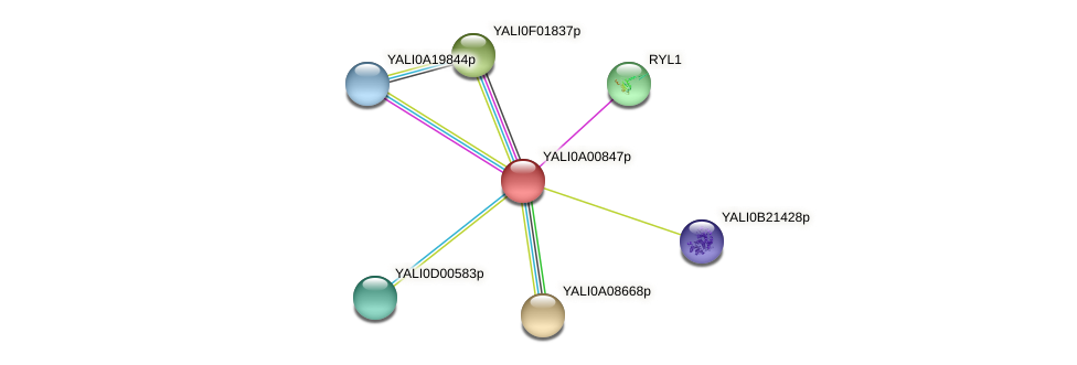 XP_499631.1 protein (Yarrowia lipolytica) - STRING interaction network