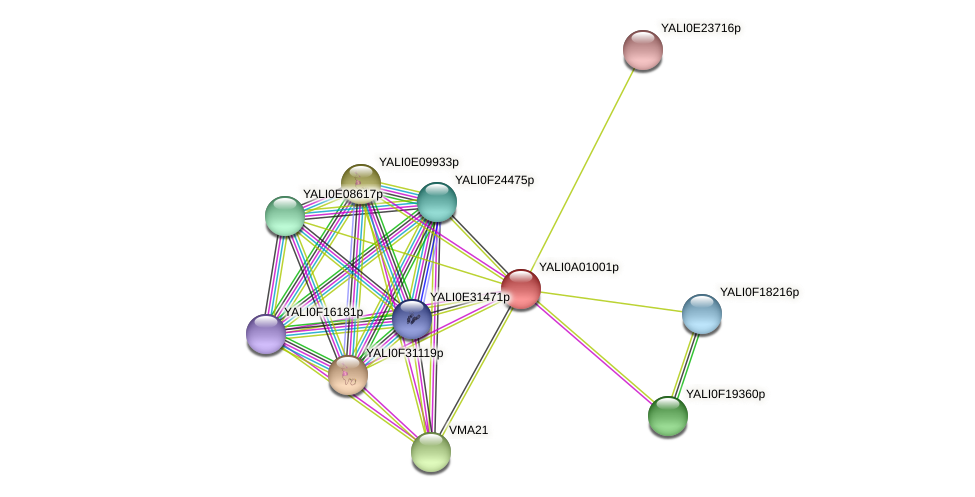 XP_499638.1 protein (Yarrowia lipolytica) - STRING interaction network
